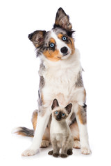 Cute puppy and a kitten isolated on white background