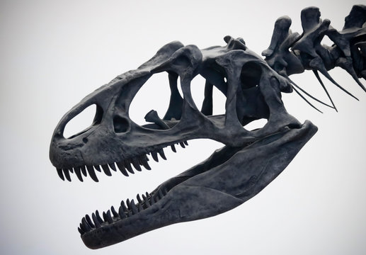 A Portrait of an Allosaurus Skull