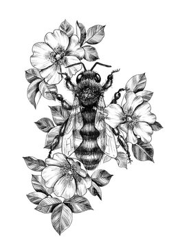 Hand Drawn Monochrome Bee among  Dog Rose Flowers