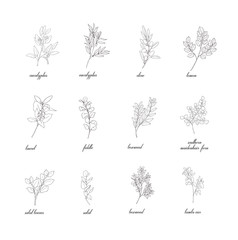 Set of plant branches. Greenery design elements.