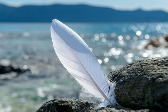 France, Corsica, Bonifacio, white feather at rock