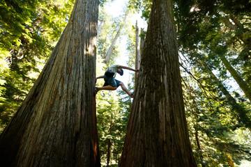 Man climbing at Cedar trees at Roosevelt Grove of Ancient Cedars, Idaho, USA