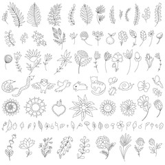 collection of hand-drawn flowers, branches, leaves and animals. Set of botanical doodles