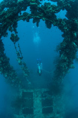 A diver explores the wreck of the Chuyo Maru sunk during World War II in Palau.
