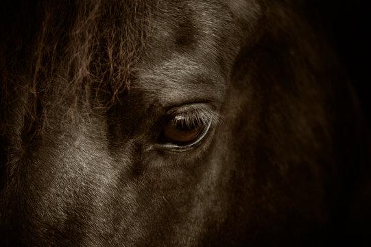 Großaufnahme des Auges eines Friesenpferd, Pferdeauge, Pferd
