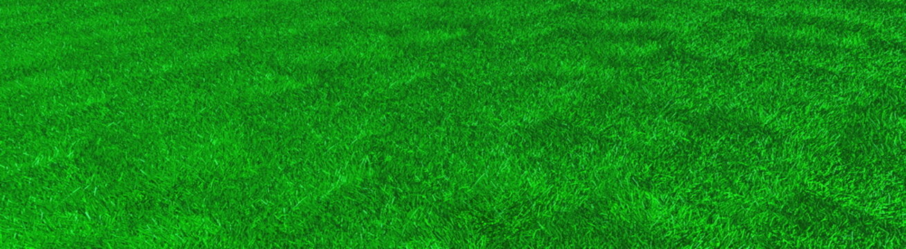 artificial grass, texture of green grass, 3d rendering, trugreen, processed with lawn mower and aerator, panorama