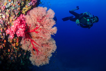 Wall Mural - SCUBA diver on a colorful, healthy tropical coral reef