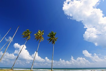 Wall Mural - Coconut trees on tropical beach with blue sky background
