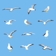 various poses of seagull. flat design style minimal vector illustration