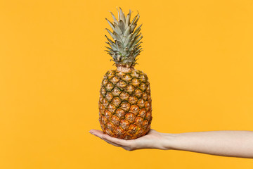 Close up cropped photo of female hold in hands fresh ripe pineapple fruit isolated on yellow orange wall background in studio. Proper healthy nutrition, vitamins concept. Mock up copy space.