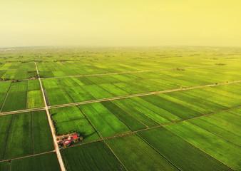 Foto op Aluminium Zwavel geel Aerial view of green paddy field in sekinchan, malaysia