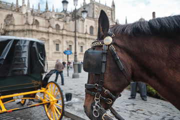 horses at the Cathedral of Saint Mary of the See (Seville Cathedral) in Seville, Andalusia, Spain in a sunny and cloudy day.