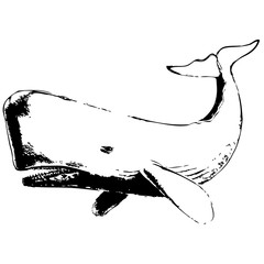 Whale hand drawn vector illustration on white background