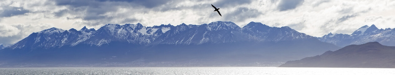 A lone albatross flying over the Beagle Channel, Patagonia