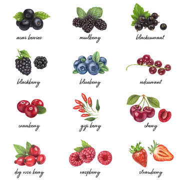 Fresh berries list with names