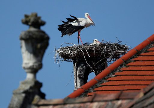 White storks are seen inside their nest atop a chimney above the rooftops in Rust