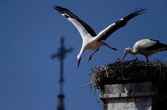 A white stork flies off a nest in front of a church's cross in Rust
