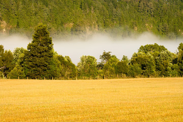 Early fog in the meadow, Villarrica, Araucania Region, Chile, South America