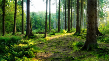 Beautiful forest in spring with bright sunlight shining through the trees