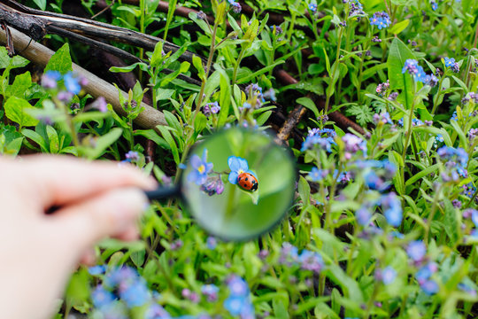 Ladybug sitting on flower through a magnifying glass