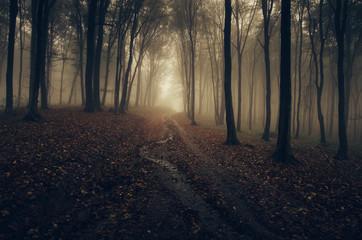 Foto auf Acrylglas Schwarz dark autumn forest road in golden sunset light