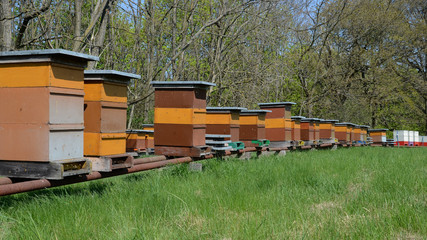 Bienenzucht, Bienen