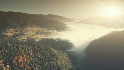 Misty Mountain Coniferous Forest Slope Aerial View. Fir Tree Wood Foggy Wild Nature Landscape Overview. Pine Forestry Highland Valley Eco Friendly Environment Concept Drone Flight