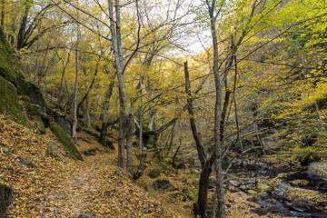 Niesamowity widok na rzekę Devin wąwóz, w górach Rodopy, Bułgaria
