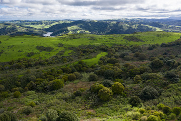 A wet winter has caused lush growth in the East Bay hills of northern California.