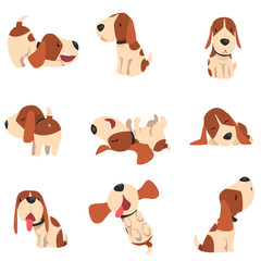 Cute beagle dog in various poses set, funny animal cartoon character vector Illustration on a white background