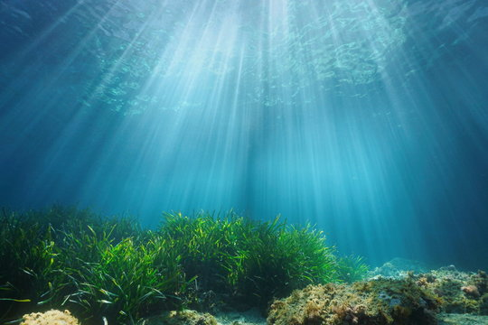 Natural sunlight underwater through water surface with seagrass and rock on the seabed, Mediterranean sea, France