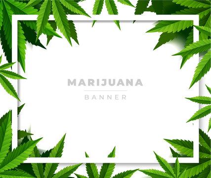 Green cannabis leaf drug marijuana herb Background.