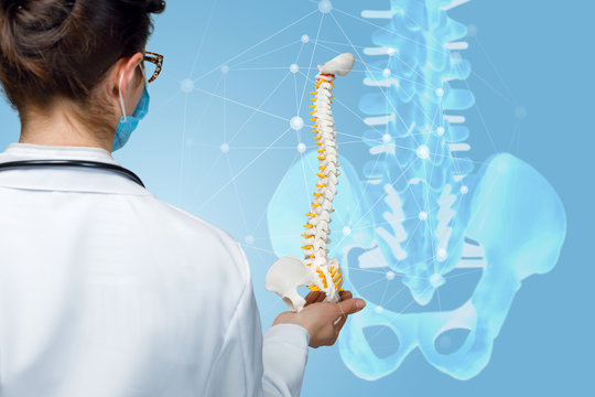 A physician holding an artificial spine model.