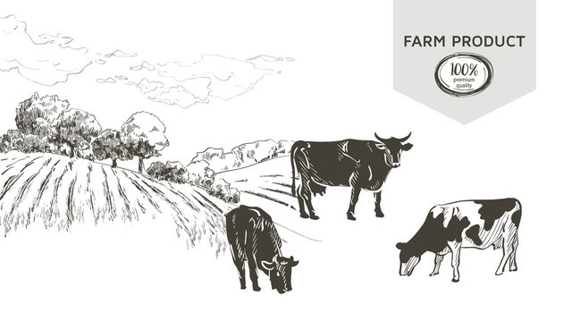 Cow in graphic line style, hand drawing vector image