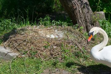 Swan's Nest in Heiligenhaus