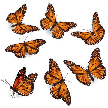 Vector Orange Tropical flying Butterflies Illustration Set