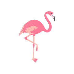 Pink flamingo. Isolated exotic bird. Tropic animal. Summer illustration