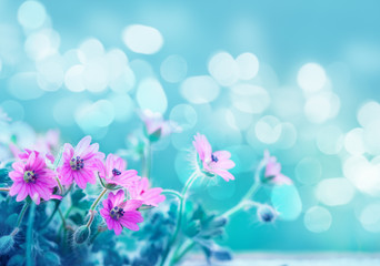 beautiful flowers background, spring blossom design