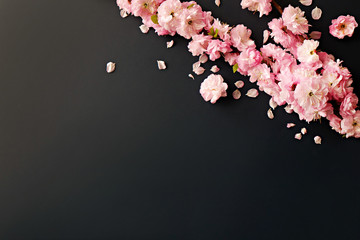 Bunch of spring flowering branches with a lot of white-pink blossoms on paper background. Rustic composition w/ spring flowers on matte black table. Close up, copy space, top view.