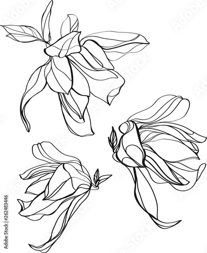 Set Of Flowers Black And White Line Illustration Of Magnolia Flower