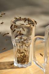 Wespen bevölkern Trinkglas im Biergarten