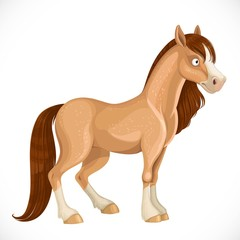 Cute beige horse with a white spot on the face and dark mane isolated on white background
