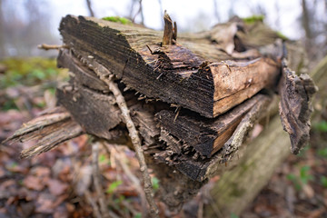 Natural habitat for insects in the forest in the morning. Rotten wood as protection to preserve biodiversity.