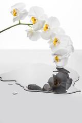 Fototapeta Kwiaty białej orchidei odbijające się w kałuży wody.  kwiaty storczyka na białym tle.