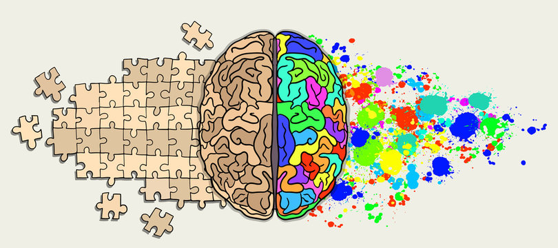 Brain. Right and left hemisphere responsible for creativity and logic. splash and puzzles