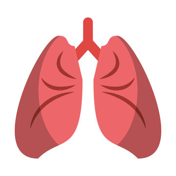 Human lungs cartoon isolated