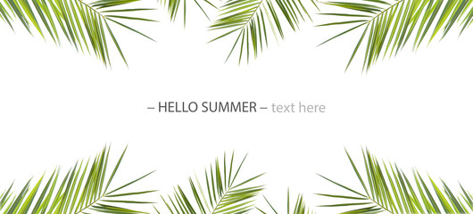 banner background with green leaves of palm trees isolated on a white background.space for your text