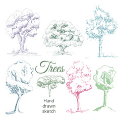 Collection with hand drawn trees in sketch syyle isolated on white background.