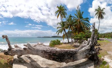 Republic of Trinidad and Tobago - Tobago island - Roxborough beach - Tropical beach of Atlantic ocean
