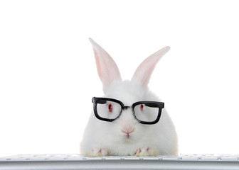 Portrait of an adorable white albino baby bunny rabbit wearing intelligent geeky looking black...